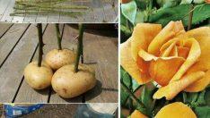 Hobi Bitki Yetiştiriciliği ile İlgili Muhteşem Fikirler