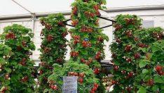 Bahçesinde ya da balkonunda sebze yetiştirmek isteyenler için harika bir fikir