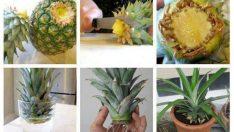Bahçede meyve ve sebze yetiştirmek için yaratıcı ve değişik fikirler