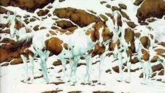 Bu resimde 7 tane at görüyorsan süper zekisin demektir, siz kaç tane at görüyorsunuz ?