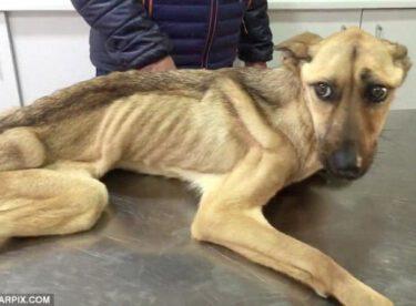Kahraman Hayvanseverin Bir Köpeği Hayata Bağlama Hikayesi