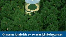 Ormanın içinde bir ev ve evin içinde bir ağaç işte evin içi