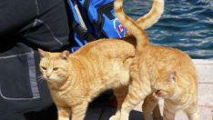 En Mükemmel Anda Çekilmiş, Mutluluk Garantili 25 Kedi Fotoğrafı