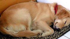 Köpek Her Gün Tanımadığı Kadının Evine Gidip Uyuyordu – Kadın Köpeğin Boynundaki Notu Görünce Çok Şaşırdı