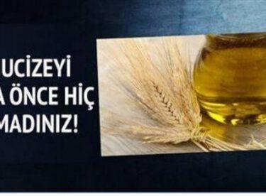 Daha Önce Hiç Duymadığınız Buğday Yağının Faydaları Nelerdir?