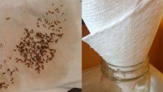 Bu Harika Yöntemle Sivrisineklere Bu Yazı Kabusa Çevireceksiniz