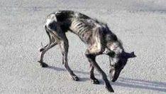 Kimse 'İskelet' Köpeğin Yanına Yaklaşmıyordu – Bakın Bir Hayvansever Köpeğin Hayatını Nasıl Değiştirdi