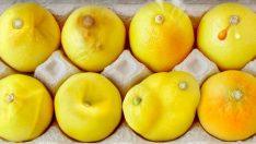 Meme Kanserinin En Yaygın Belirtileri Limonlarla Tasvir Edildi – İşte O Yaygın Belirtiler