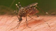Sivrisineklerden Nefret Mi Ediyorsunuz? – İşte Doktorların Önerdiği Gelmiş Geçmiş En Etkili Sivrisinek Önleyici