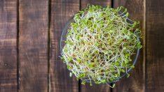 Bu 10 Sebze Fazla Kilo, Yorgunluk ve Saç Dökülmesine Karşı Tam Anlamıyla Bir Şifa Kaynağı