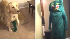 Köpeğinin En Sevdiği Oyuncağın Kostümünü Giyerek Yanına Gitti – Bakın Köpek Ne Tepki Verdi
