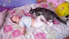 Akıllı Kedi Ağlayan Bebeği Bakın Nasıl Susturdu
