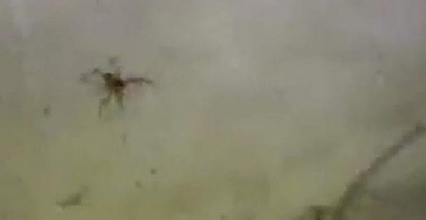 Milas'ta Zehirli ve Etle Beslenen 'Sarıkız böceği' paniği Uzmanlar Halkı Uyardı Aman Dikkat