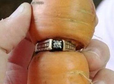 13 yıldır kayıp olan evlilik yüzüğü, bir havuca takılı halde bulundu