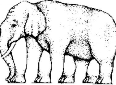 Sosyal medyayı ikiye ayıran soru! Bu filin kaç bacağı var?