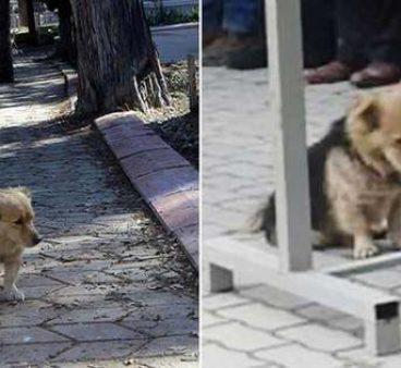 Her Gün Evden Kaçan Köpeğin Gittiği Yeri Öğrenince Gözleriniz Dolacak