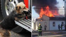 İtfaiyeciler Yangını Söndürmeye Çalışırken Köpek Eve Bakın Neden Girdi