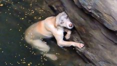 Kuyuda Mahsur Kalan Zavallı Köpek Kurtarıcısına Böyle Teşekkür Etti