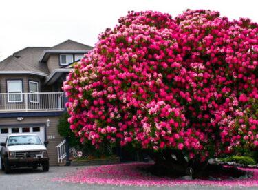 Dünyanın En Görkemli 14 Ağacı