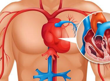 Vücudunuz Kalp Krizini 1 Ay Önceden Haber Veriyor – İşte Dikkat Etmeniz Gereken 6 Belirti