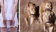 Tecavüzcüler Tarafından Kaçırılan 12 Yaşındaki Kızı 3 Aslan Kurtardı