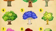 Yalnızca Bir Ağaç Seçin Ve Anlamını Okuyun! Bu Testle 2018'de Sizi Nelerin Beklediğini Öğreneceksiniz